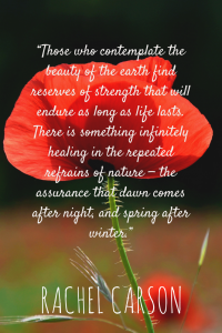 """""""Those who contemplate the beauty of the earth find reserves of strength that will endure as long as life lasts. There is something infinitely healing in the repeated refrains of nature — the assurance that dawn comes after night, and spring after winter."""""""