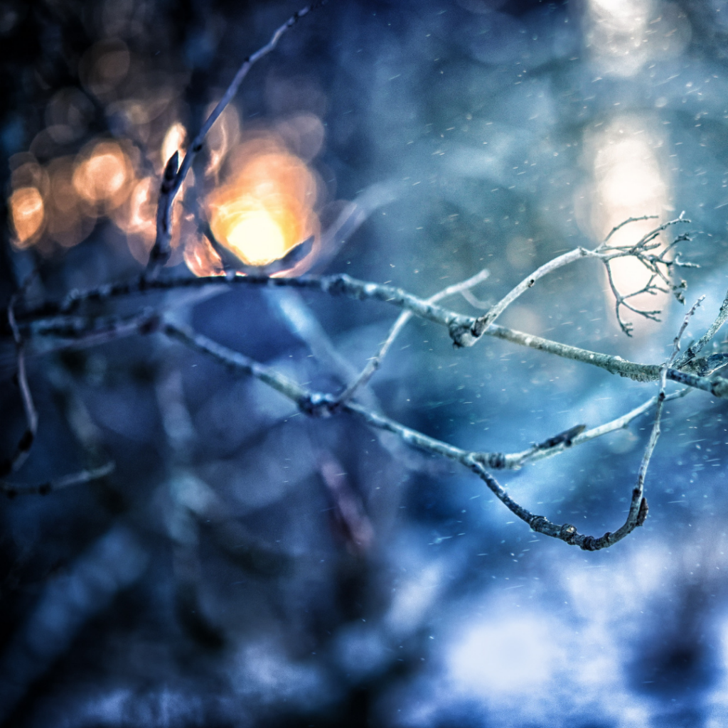winter night with icy branch